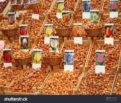 tulip bulbs sale flower market amsterdam stock photo 1736458