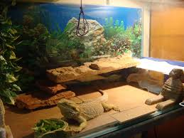 Improper Shedding Bearded Dragon by Bearded Dragons