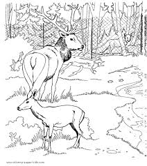 Zoo Animal Coloring Page Color