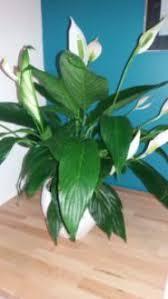 plante d駱olluante bureau adoptez une plante dépolluante pour être au bureau nath