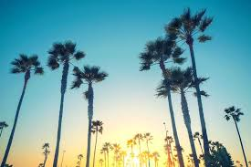 California Palm Trees Tree Sunset By Iphone Wallpaper Tumblr