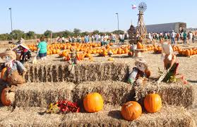 Pumpkin Patches Near Dallas Tx 2015 by Image Sneak Peek Best Pumpkin Patches In Fort Worth U2013 Tcu 360