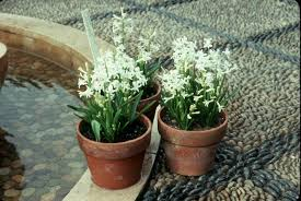it s time to plant tulips hyacinths
