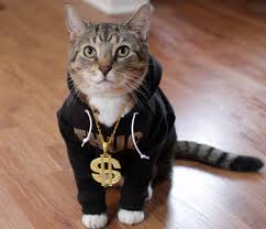 thug cat hoodcat clothing for cats