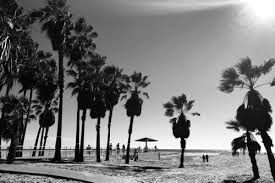 Venice Beach California Kelseylorene Follow Unfollow Beachsunpalm Treesbohoblack And Whitephotographyoriginal