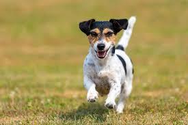 hund jault gründe und tipps was sie tun können