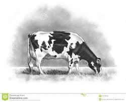 Coloriage Vache A Imprimer