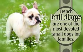 Non Shedding Small Dog Breeds List by Non Barking Dog Breeds