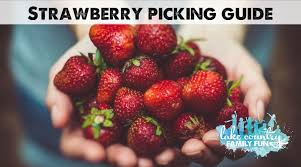 Southeast Wisconsin Pumpkin Patches by Go Pick Some Strawberries Farms In Southeast Wisconsin