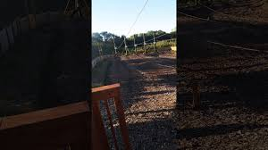 Pumpkin Patch Marana by We Are At Vala U0027s Pumpkin Patch And I Am Riding The Zipline Youtube