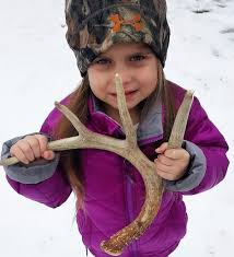 Deer Antler Shed Hunting by Shed Antlers Another Reason To Explore Nature In Winter