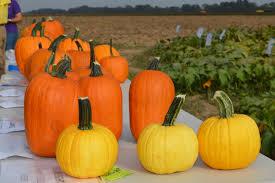 Pumpkin Patch Baton Rouge by 2016 Lsu Agcenter Pumpkin Variety Results
