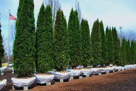 Green Acres Tree Farm Fding The Perfect Christmas Tree News The Repository Christmas Farms In Ohio Rainforest Islands Ferry Weekend Getaway Guide Wooster And Wayne County Ohio Girl Twinsberry Tree Farm Victorian Bouquets Events Farm Legs Butt Core Stay Fit 24 20 Jun 2017 Looking For A Life Culture Amish Country Lodging Bed Breakfast House Cabins Barn Lights Decoration