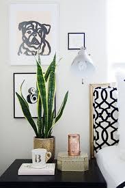 plante verte dans une chambre à coucher plante verte pour chambre a coucher papier peint jungle tropical