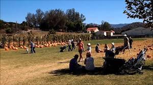 Marana Pumpkin Patch 2015 by Bates Nut Farm In Hd San Diego Pumpkin Patch Youtube