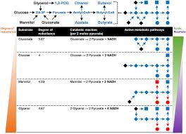 Genome directed analysis of prophage excision host defence