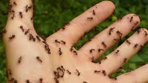 ameisen bekämpfen natürliche hausmittel für garten und