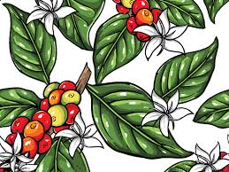 Coffee Plant Pattern By Abdilah