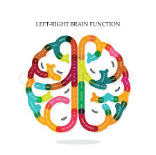 And Right Brain Function Ideas On Backgrounddesign For Posterflyercoverbrochurediagram Or Presentation Templateeducation Concept Business Idea