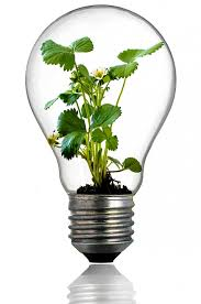 Free photo Bulb Light Bulb Growth Plant Free Image on
