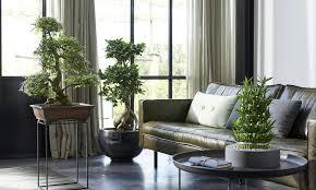 bonsai baum im miniformat das haus zimmerpflanzen