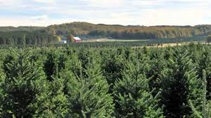 Fraser Fir Christmas Trees North Carolina by Christmas Tree Species Fraser Fir Youtube