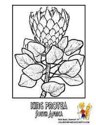 See Coloring Flower Pictures Of World Governments Panama Venezuela Free Printouts Official Blossoms Like Orchid Spain Carnation