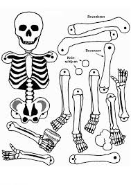 Body Skeleton Colouring Pages