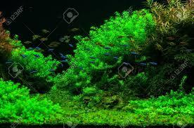 aquarium d eau douce baigner pêché dans un cadre verdoyant magnifique aquarium d eau