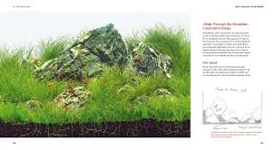 Aquascaping: Oliver Knott: 9783833824111: Amazon.com: Books Aquascaping Lab How To Mtain Trimming Clean And Change Aquascape Pinterest Red Rock Journal By James Findley The Green Machine Pennywort Brazilian Aquatic Plant Google Search Aquascaping Giuseppe Nisi Giuseppe_nisi_aquascaping Instagram Aquarium Sand Layouts Nature For Simons Blog Layout Ideas Tag Layout Aquascape Marcel Dykierek Aqua Rebell Shaping I Undaterworlds 85 Ian Holdich Tropica Plants