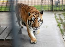 100 Tiger Truck Stop Louisiana Petition Update Tony The Tiger To Remain At Truck Stop