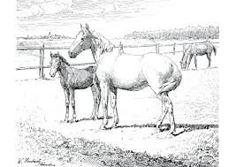 Mare And Foal Colouring Pages Coloring Page Horse