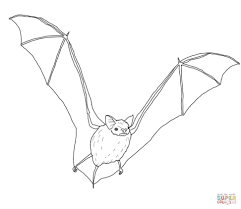 Large Size Of Coloring Pagecoloring Pages Bats 14 Free Printable Bat For Kids Page