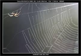l araignée qui tisse sa toile le pays des sucs haute loire