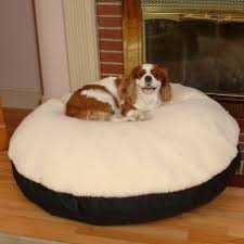 snoozer pet products for sale