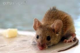 la souris le jardin des sources