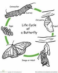 Worksheets Color The Life Cycle Butterfly