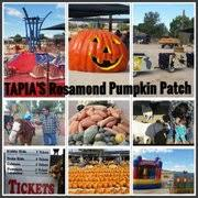 Tapia Brothers Pumpkin Patch by Tapia U0027s Rosamond Pumpkin Patch Pumpkin Patches 1855 W Rosamond