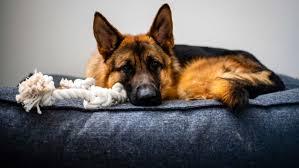 hundebett einrichten wie sieht ein guter schlafplatz für