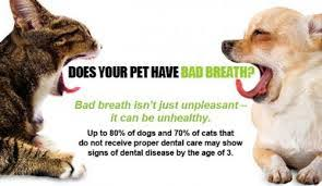 cat dental care why your cat needs dental care
