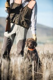 German Shorthaired Pointer Shed Hunter by Covey Rise Magazine The Versatile Pudelpointer