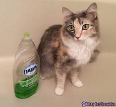 bathing cats 8 all ways to win the war on fleas kitty cat chronicles