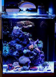 eclairage led pour aquarium eau de mer aquarium marinus dennerle eau de mer forum aquariophilie