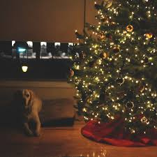 What Kind Of Trees Are Christmas Trees by Snapshots Archives Janine Reneejanine Renee