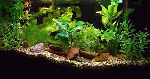 live aquarium plant bulbs aquarium design ideas