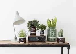 plante de bureau plante pour bureau luxe plantes vertes l atout séduction des