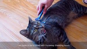 Petco Dog Shedding Blade by Cat Loves Be Brushed With Fursweep Shedding Brush Deshedding Tool