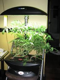 november 2009 indoor gardening my aerogarden and houseplant
