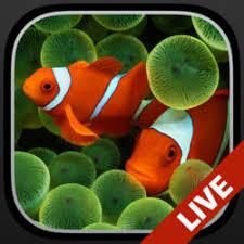 fond ecran aquarium animé gratuit windows 8 android pour pc windows