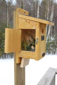 1038 Best Bird Abodes Images On Pinterest | Bird Houses, Bird ... Backyard Birdhouse Youtube Free Images Insect Backyard Garden Inverbrate Woodland Amazoncom Boys Woodworking Bbw81 Cardinal Nest Box Bird House Decorative Little Wren Haing Yard Envy Table Lawn Home Green Lighting Wooden Modern Take On A Stuff We Love Pinterest Shop Glory 8125in W X 85in H 8in D White Discovery Channel Birdhouse Wooden Nesting Baby Birds In My Bird House How To Make Spring Diy Craft For Kids Couponscom
